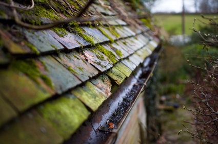 An image of a roof covered in moss.